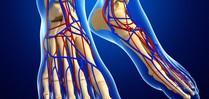 Cirkulace krve v chodidlech